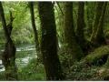 Bosque atlántico  por Jorge Prieto