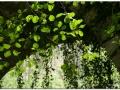 Vegetación por Jorge Prieto